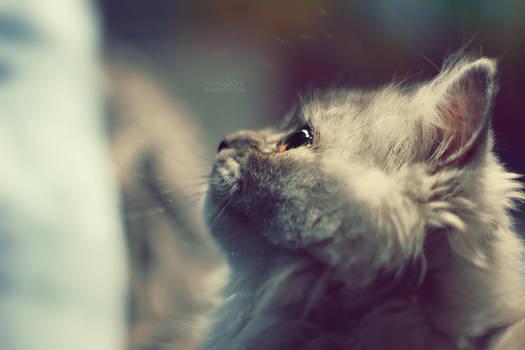 .: Cuteness :.