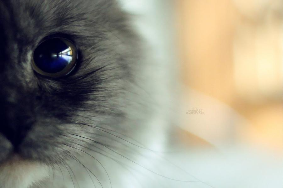 .: Katy's Eye :. by Rare-Pearl