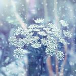 .: Winter :.