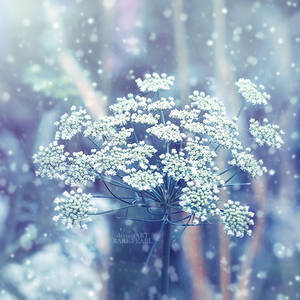 .: Winter :. by Rare-Pearl