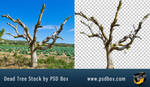 Dead Tree PNg Stock
