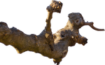 Tree Branch Cutout PNG