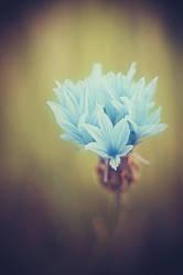 Flower by SuperSzajs