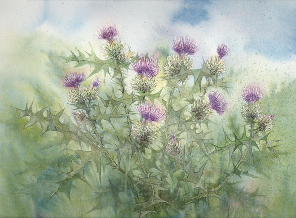 Thistles, Dragon and Watercolor art on Pinterest