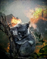 Koala Une pensee pour l'Australie by cflonflon
