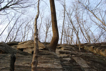 Trees on Rocks by shadowsart