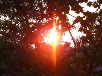 Sun through trees, again by shadowsart