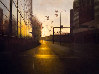 The Birds by David681