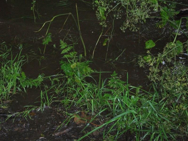 Oughtibridge Floods 2012 - The Riverside 006 by Vande-Bot
