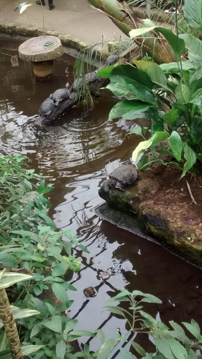 Turtles 001 by Vande-Bot