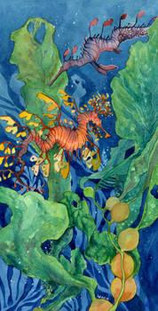 Sea Dragon Study