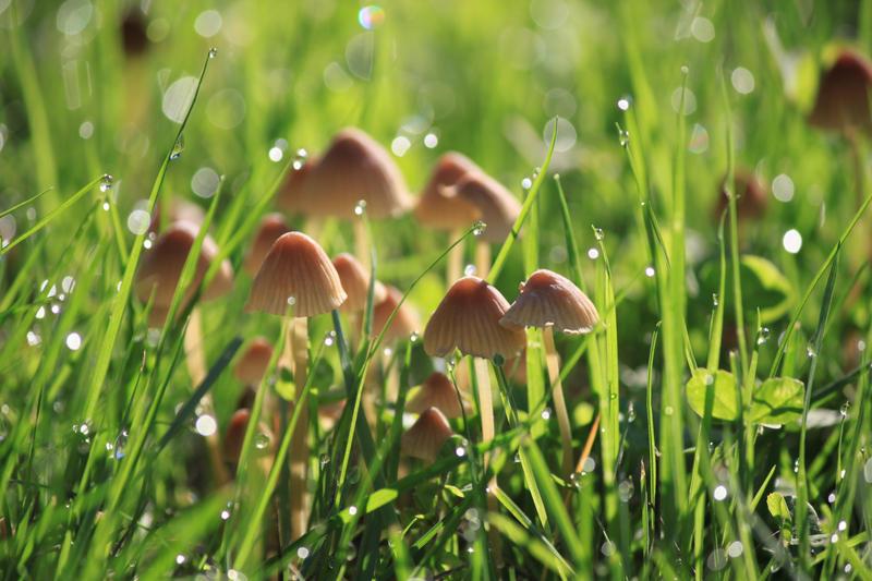 Unknown Mushroom 7 by WesternHemlock