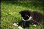 the black kitten 1