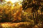 Wildwood V