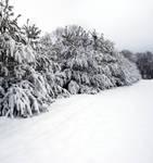 Sticky Snow V