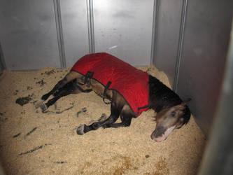 Sleepy Stallion by Knightpony