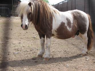 Dwarf Stallion by Knightpony