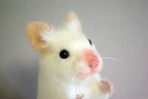 Gomdol the Syrian hamster