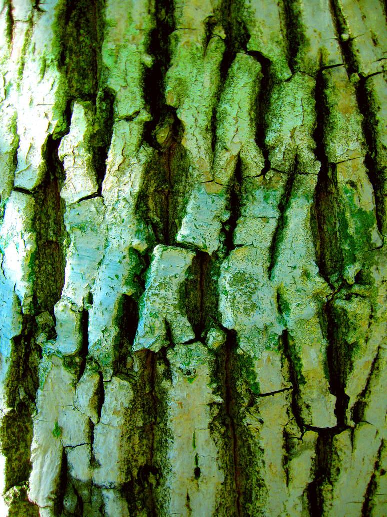 Tree Bark by OsaWahn