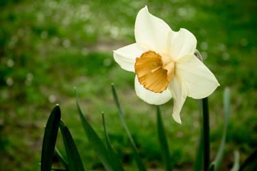 Sad spring flower by alwaysmood