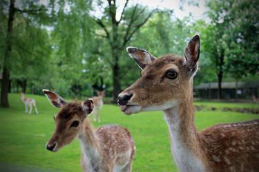 Deer by alwaysmood