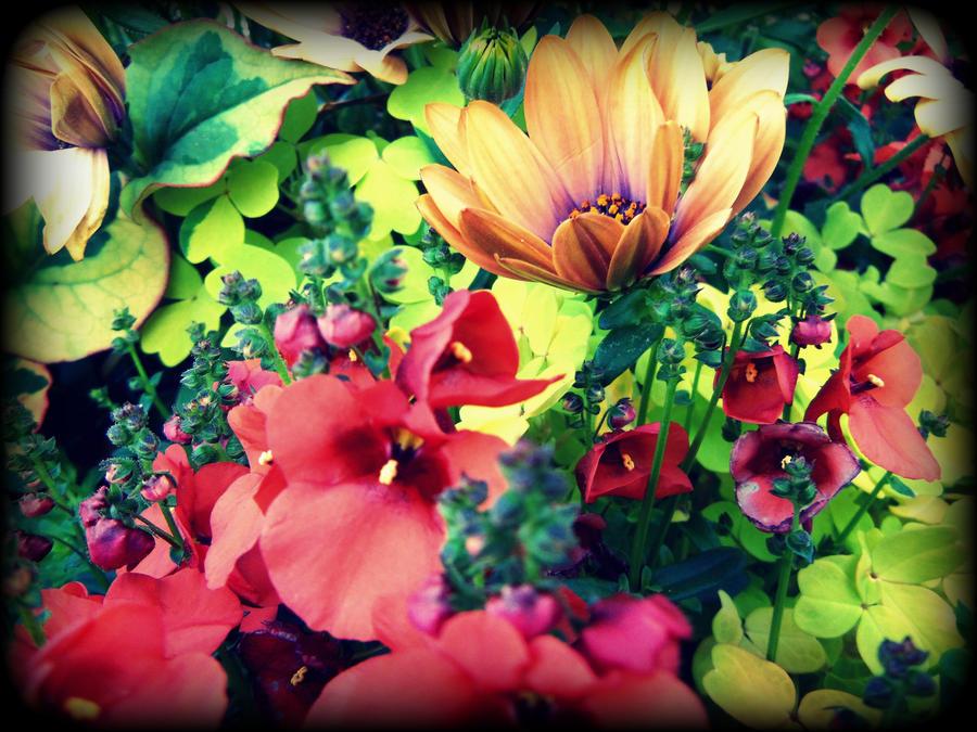 A Hint of Spring by Daemonium-Venatrix