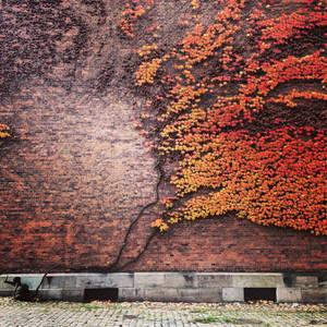 Northern autumn