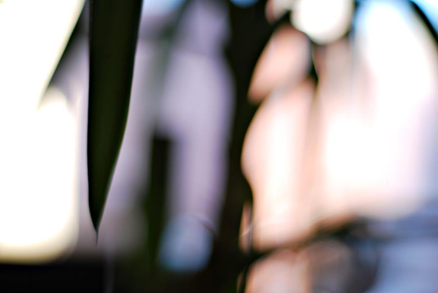 yucca by toistaitoinen