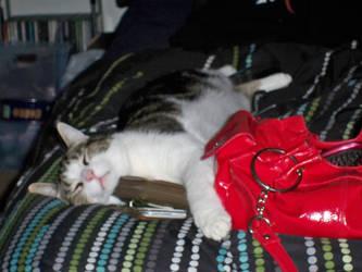Cat Stole My Wallet