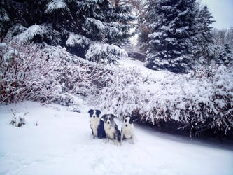 snow pups by tony-thebeat