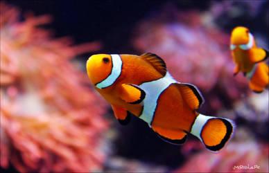 Nemo by Moosplauze
