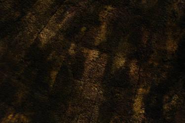Mossy Wood Macro Texture - 18 Megapixels