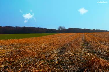 Fields of Gold by Moosplauze