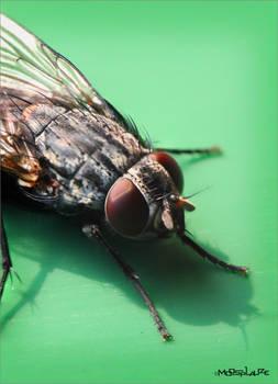Fly No. III