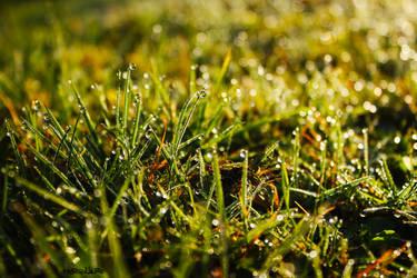 Morning Dew by Moosplauze