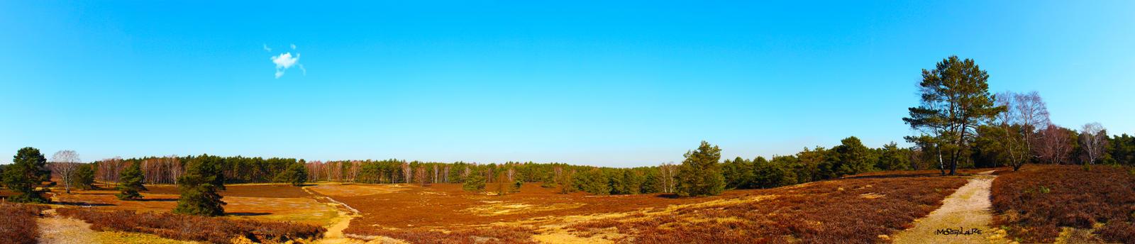 Moorland Panorama