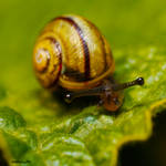 Snail Baby