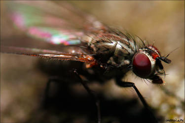 Pretty fly for an ugly Fly