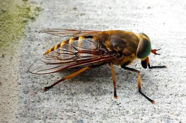Bee on Concrete