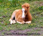 Kerry Bog Pony 1