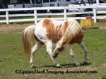 Paint Horse 5