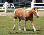 Paint Horse 7