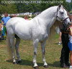 Andalusian 1