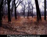 Landscape-stock 17