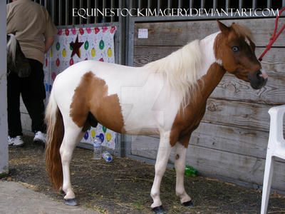 Miniature Horse 12 by EquineStockImagery