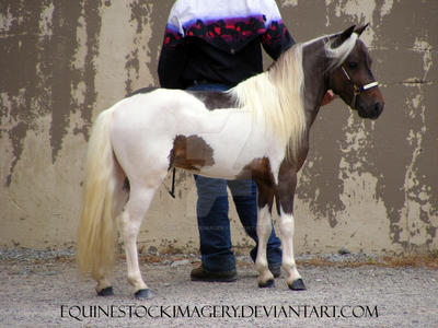 Miniature Horse 13 by EquineStockImagery
