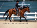 Quarter Horse 63