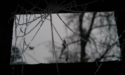 Frosted Lace