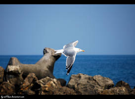 Seagull by iuli72an