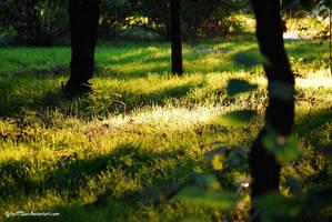 Home green grass 2 by iuli72an